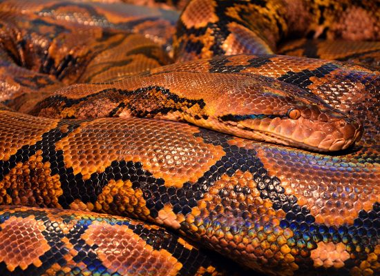 Snake in Orange Light